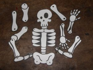 fabriquer squelette