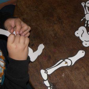 activité manuelle squelette