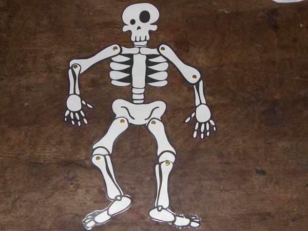 squelette articul un mod le imprimer. Black Bedroom Furniture Sets. Home Design Ideas