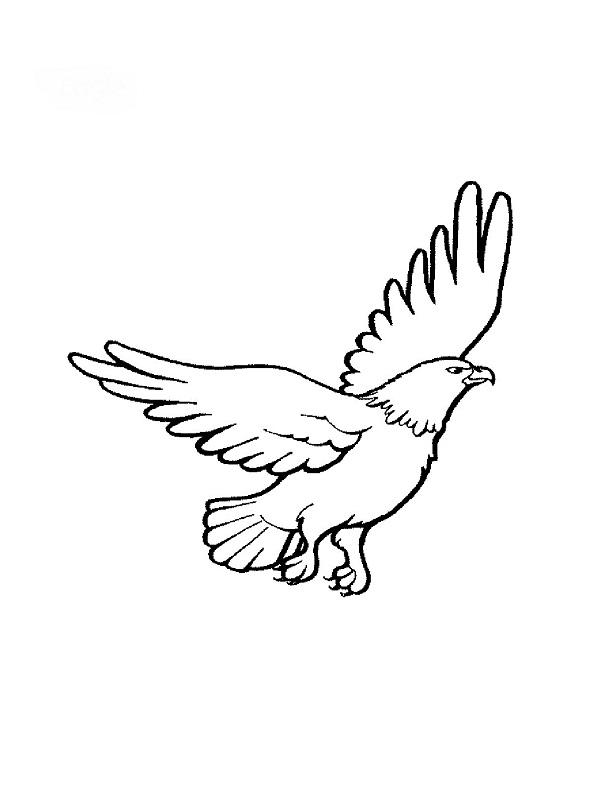 Coloriages animaux - Comment dessiner un aigle royal ...