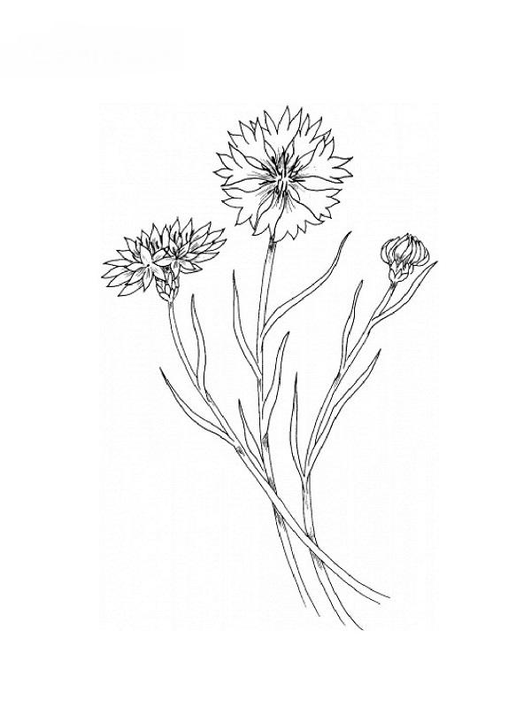 Coloriages de fleurs - Coloriage fleur 2 ans ...