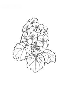 Coloriages de fleurs - Coloriage fleur tres jolie ...