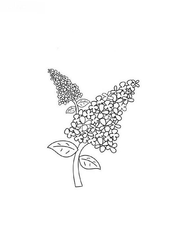 Coloriages de fleurs - Dessin de lilas ...