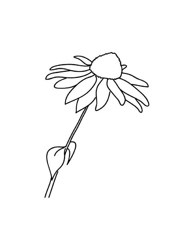 colorier une fleur