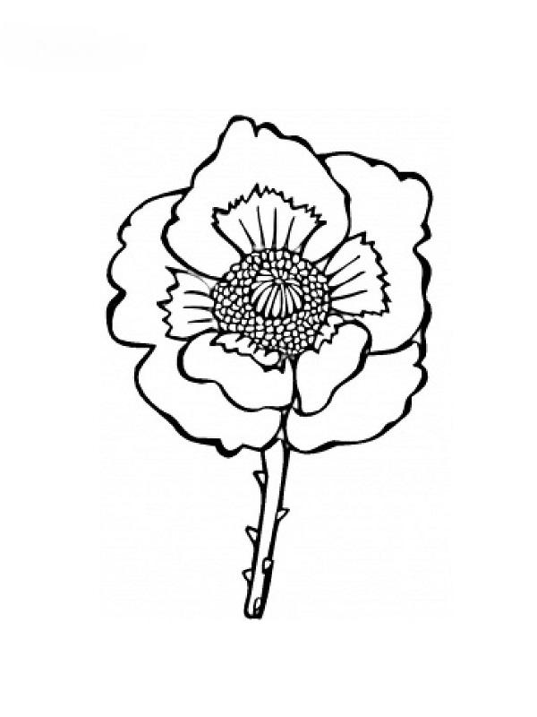 coloriages fleur