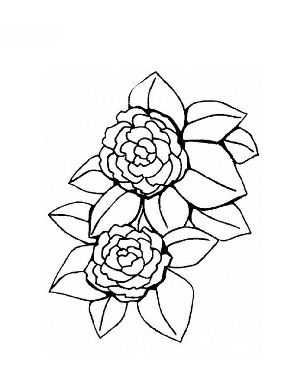 Coloriages de fleurs - Dessin de fleur facile ...