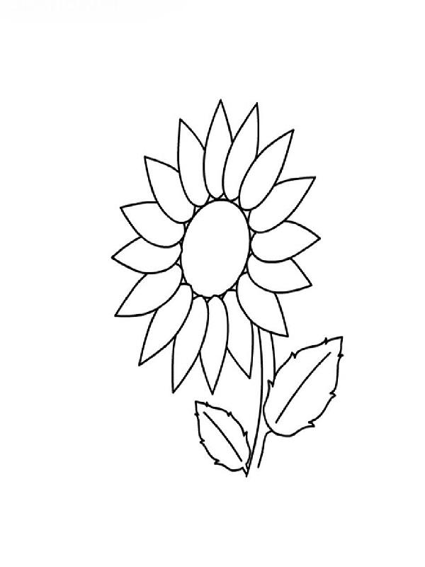 Coloriages de fleurs - Coloriage tournesol ...