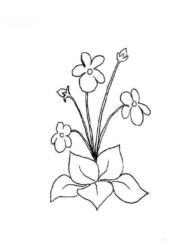 Coloriage Violette Fleur Idee D Image De Fleur