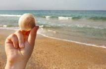 Explorer la science à la plage