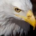 L'œil de l'aigle – jeu extérieur