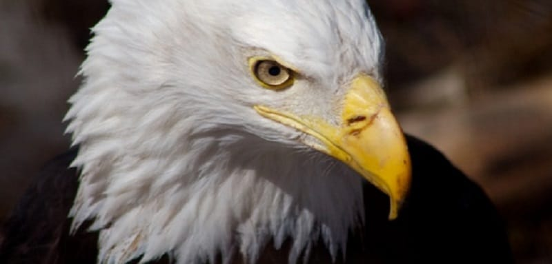 L'œil de l'aigle - jeu extérieur