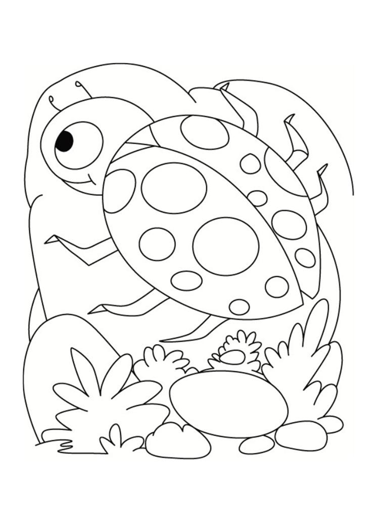 dessin de coccinelle
