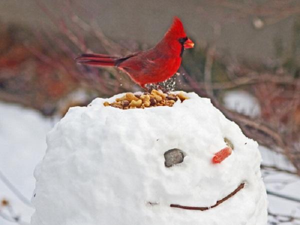 bonhomme neige créatif