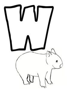 w comme wombat