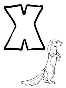 x comme xérus