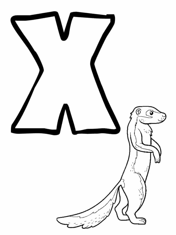 nom animal commencant par x