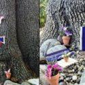 Comment transformer un arbre en maison de gnome