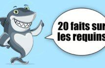 faits requins enfant