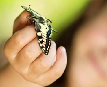 Jeux sur les insectes