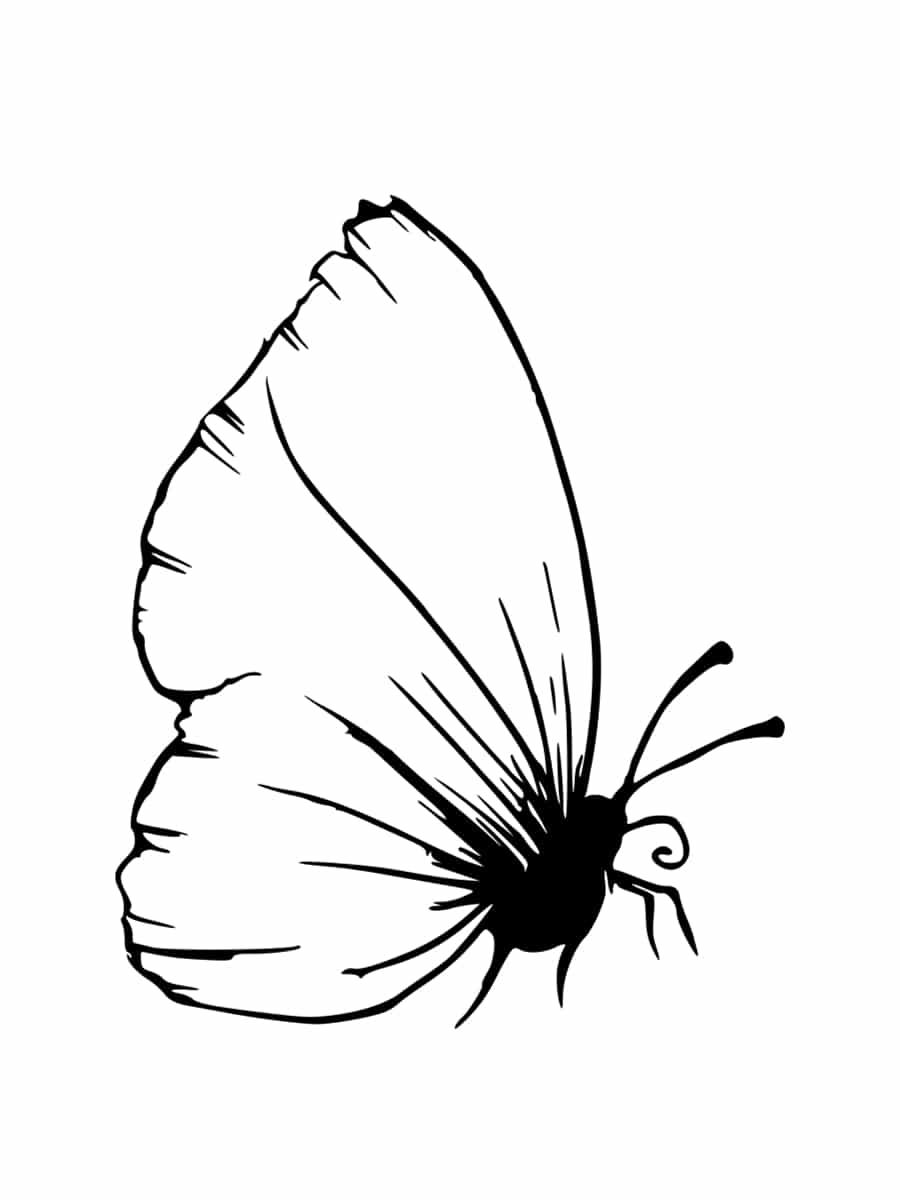 Coloriage Coccinelle Et Papillon.Coloriage Insecte Dessins A Imprimer Gratuitement