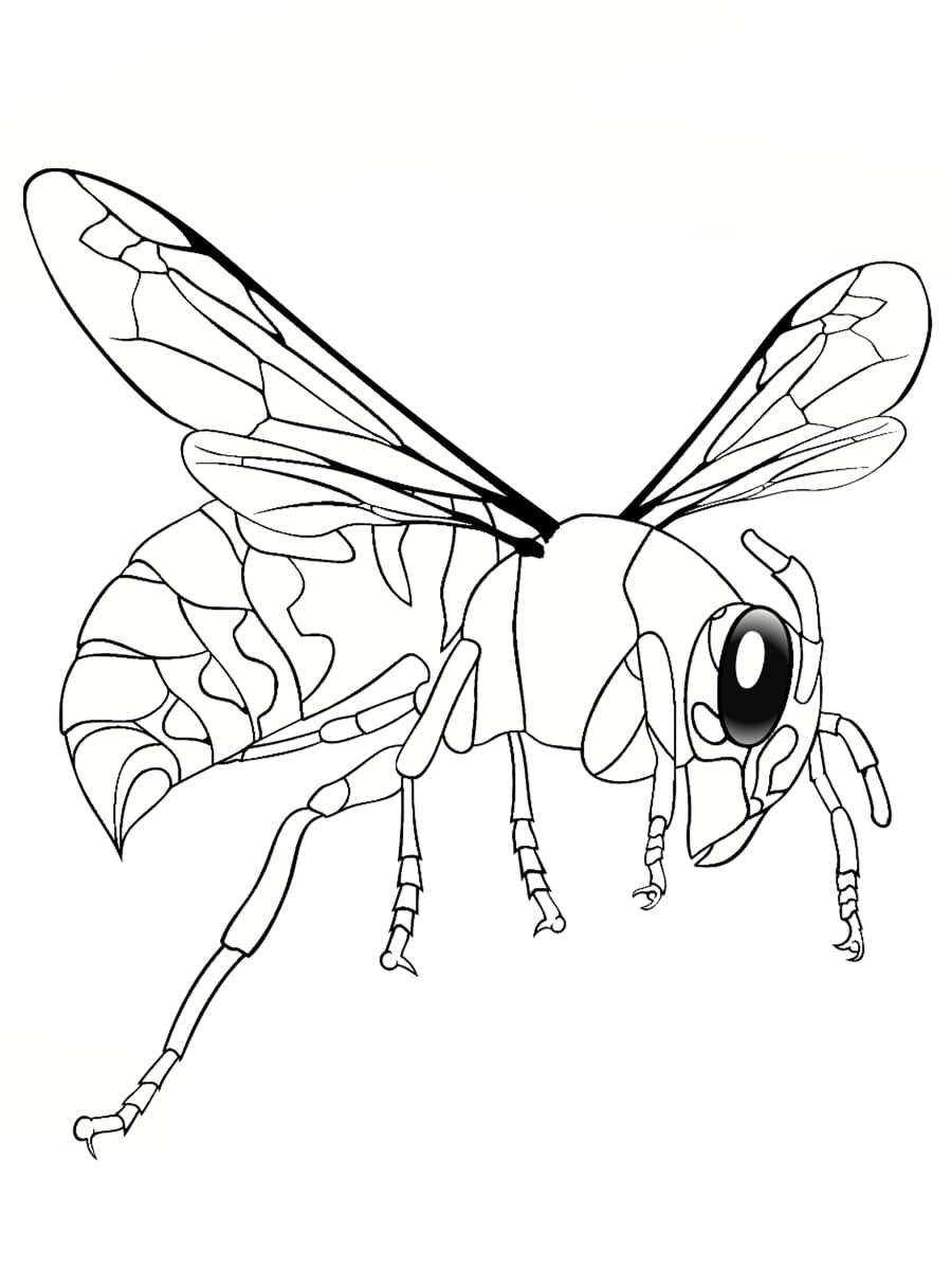 dessin abeille réaliste