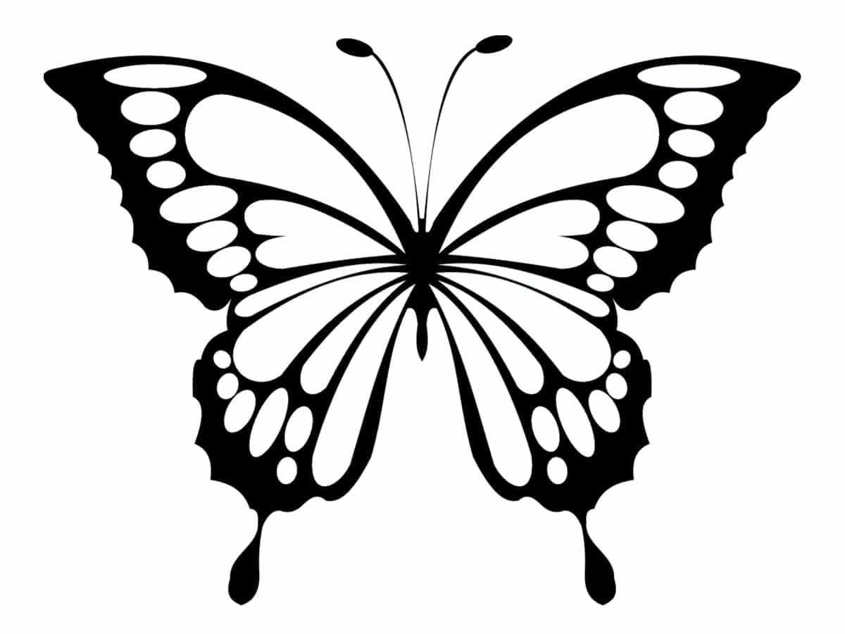 coloriage papillon gros traits