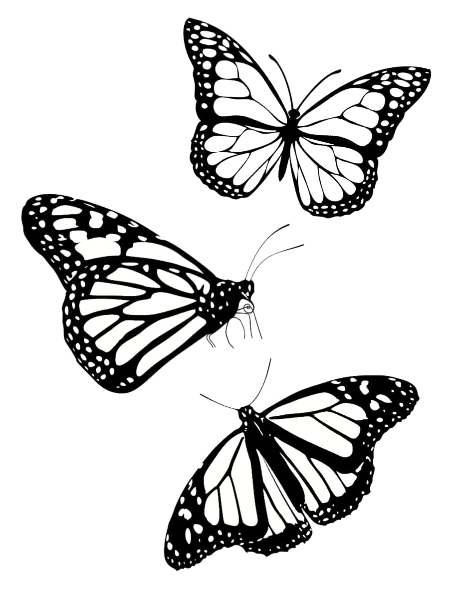 des papillons dessin