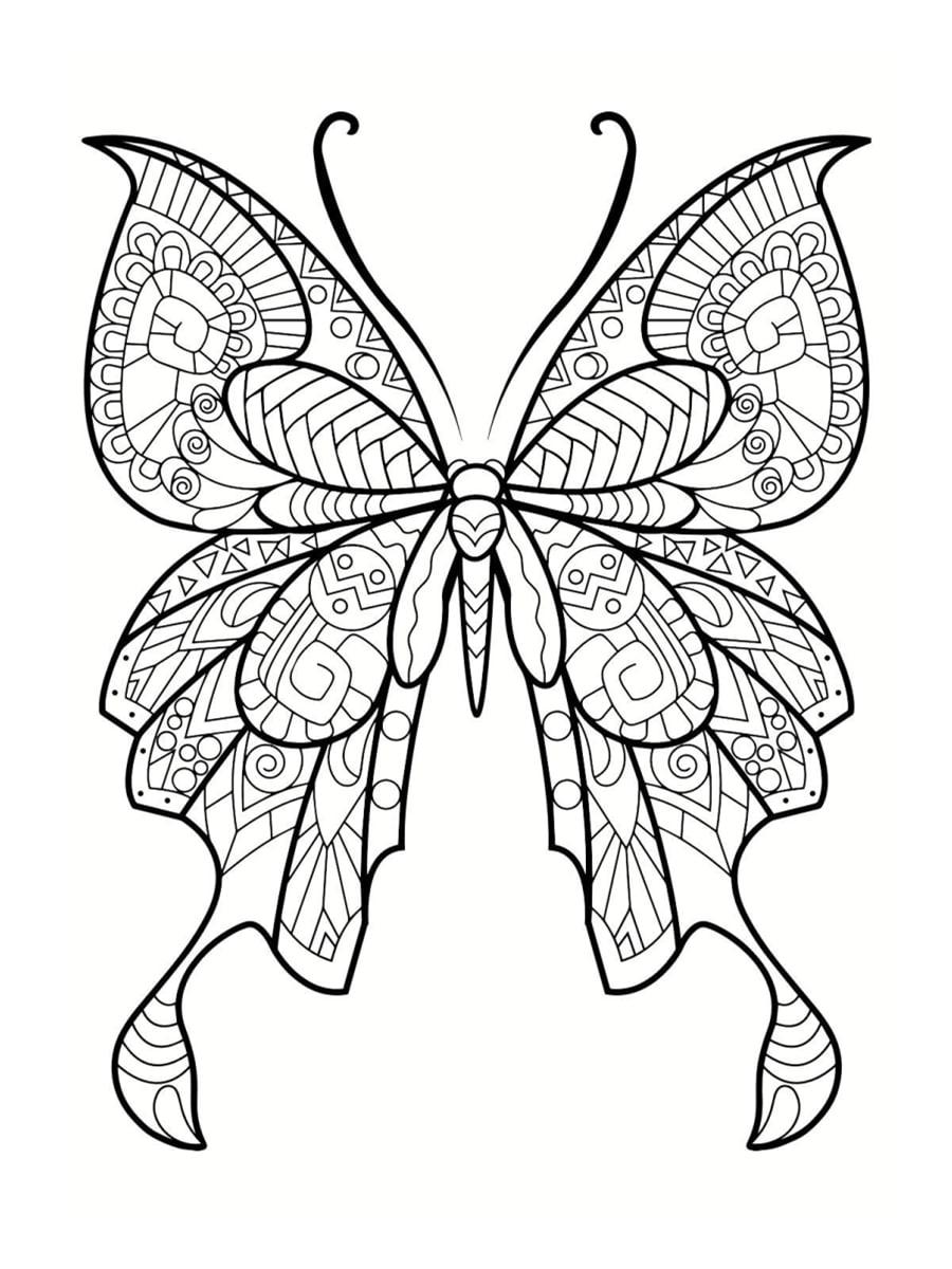 papillon coloriage adulte
