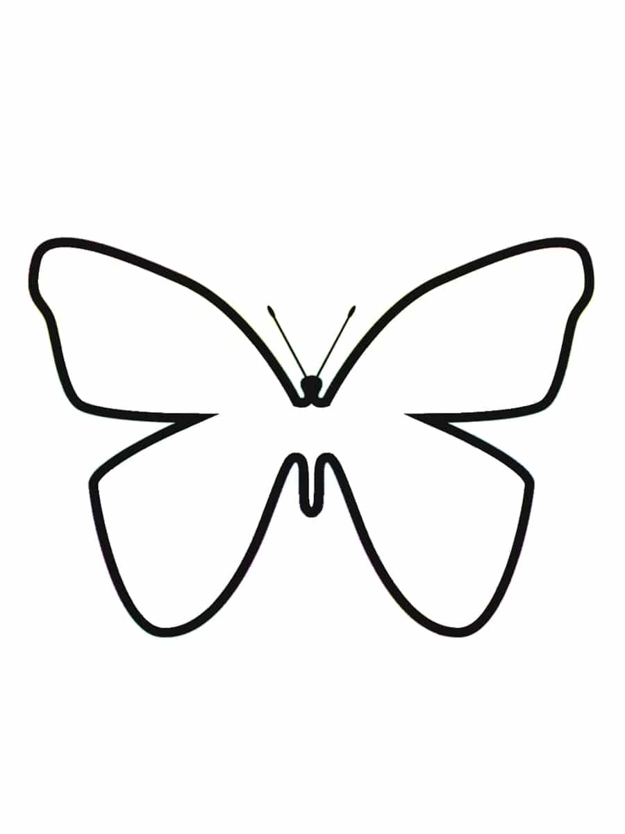 coloriage papillon blanc