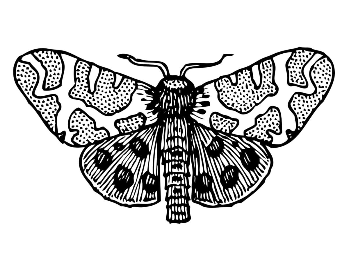 papillon de nuit à colorier