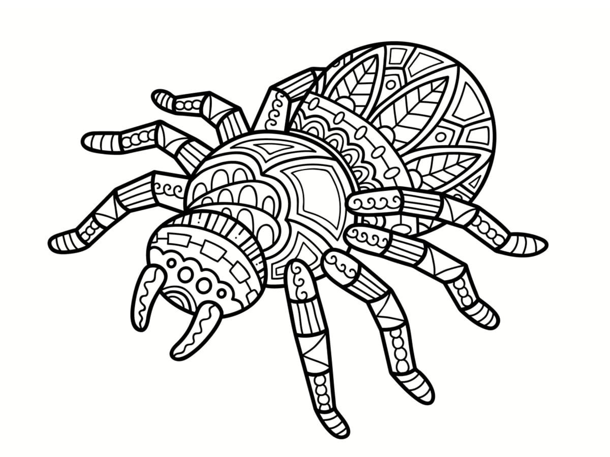 Coloriage araignée : 30 dessins à imprimer gratuitement