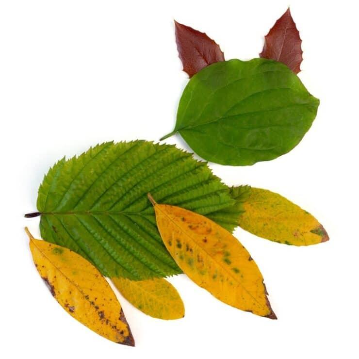 chat feuilles arbre