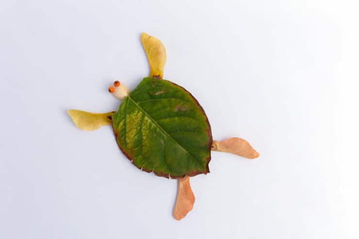 tortue feuilles arbre